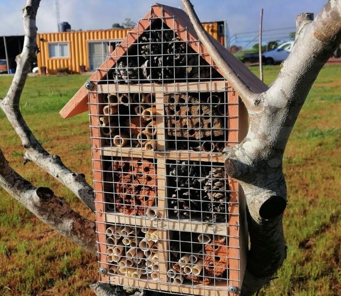 Que és un hotel de insectos y cómo funciona